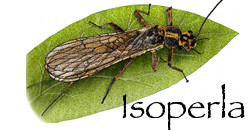 Isoperla develop apps for mobile devices